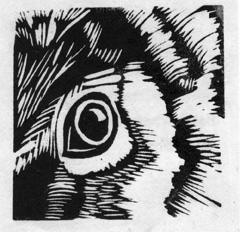 eye LR